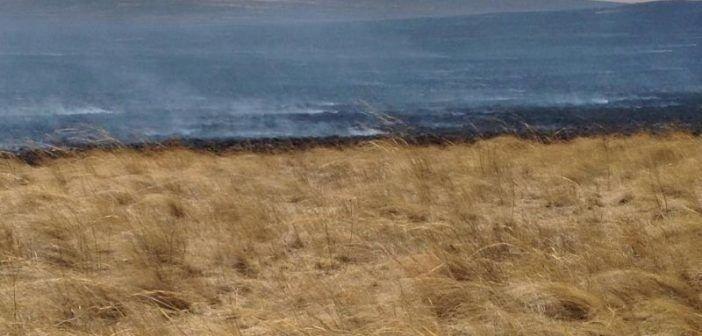 Хэнтий, Дорнод аймгийн нутагт гарсан түймрийг цурманд оруулав