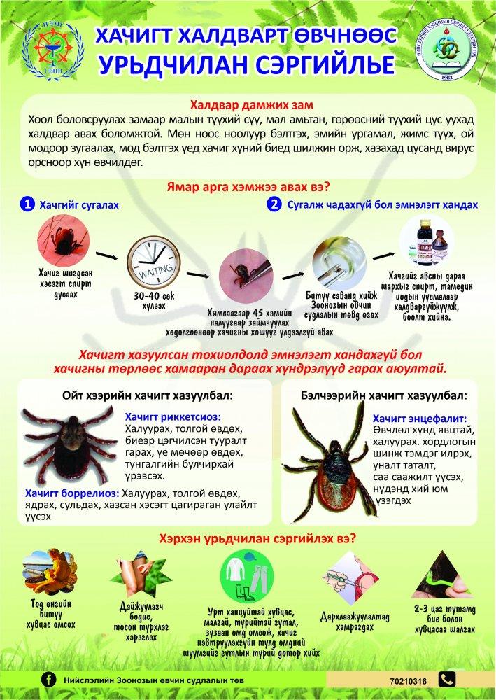 Хачигт халдварт өвчнөөс урьдчилан сэргийлье!!!