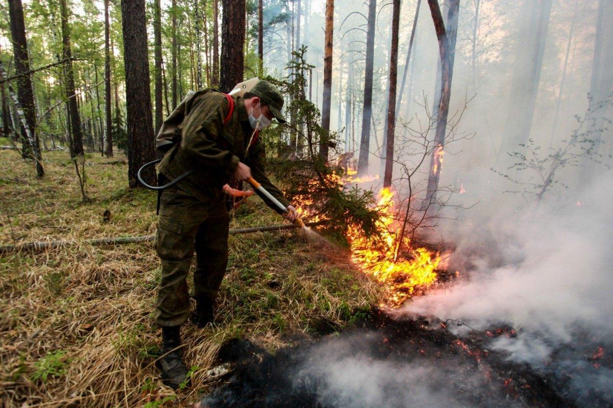 Сибирийн их түймрийн  талбай 2,4 сая га болон буурчээ