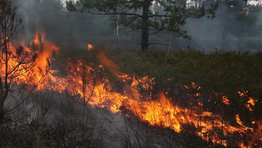 Дорнод аймагт хээрийн түймэр гарч, 320 га талбай газар шатжээ