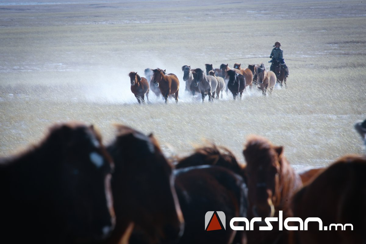 ХХААХҮЯ: Монгол Улсад урьдчилсан дүнгээр 67.1 сая толгой мал тоологдлоо