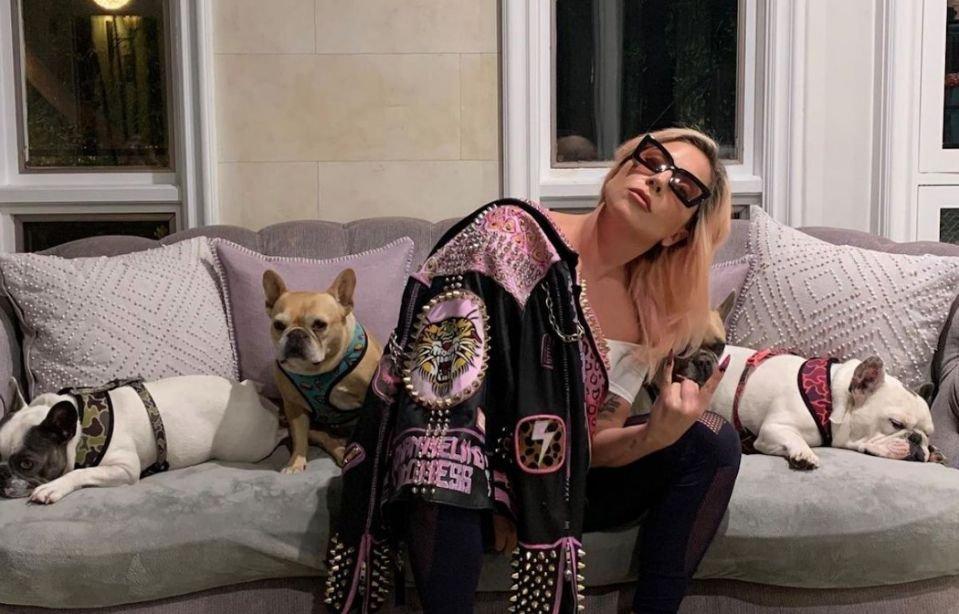 Лэди Гага нохойг нь олж өгсөн хүнд 500 мянган ам.долларын мөнгөн шагнал амлажээ