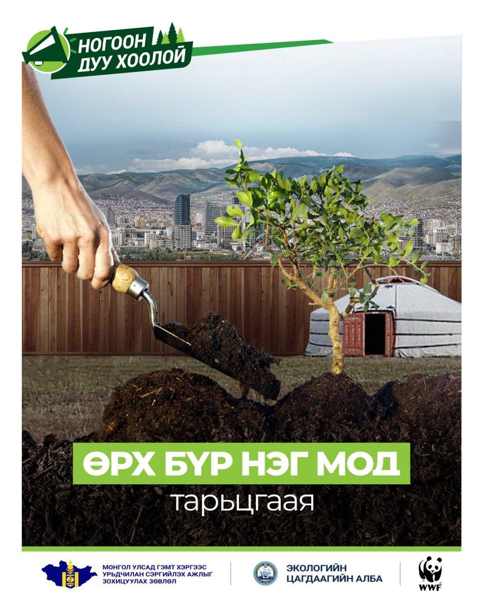НОГООН ДУУ ХООЛОЙ: Хавар 4-5 дугаар сард, намар 11 дүгээр сар дуусахаас өмнө тарьсан мод сайн ургадаг