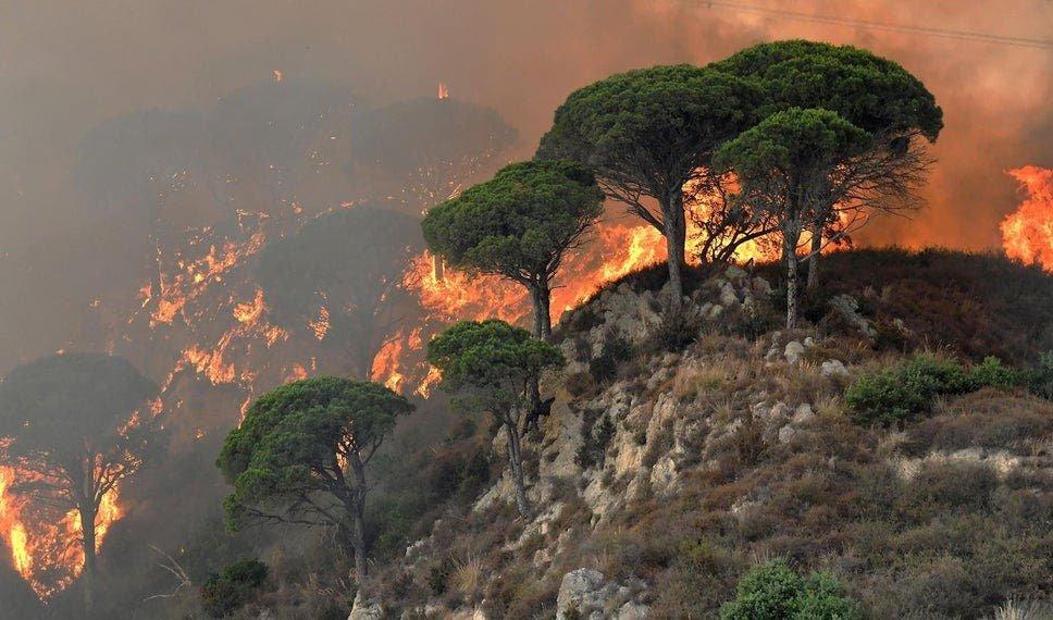 Италийн Сицили аралд агаарын хэм +48.8 градуст хүрч, гал түймэр дэгдэж байна