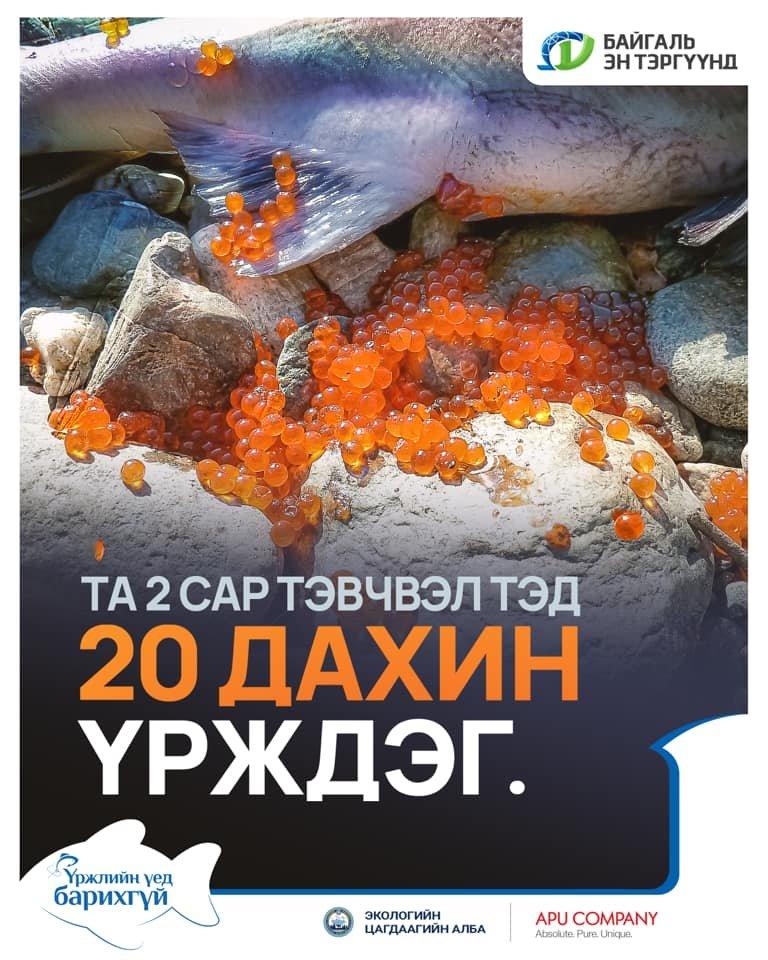 """""""Нэг загасыг үржлийн үед нь агнахгүй хамгаалснаар 20 дахин өсгөх боломжтой"""""""