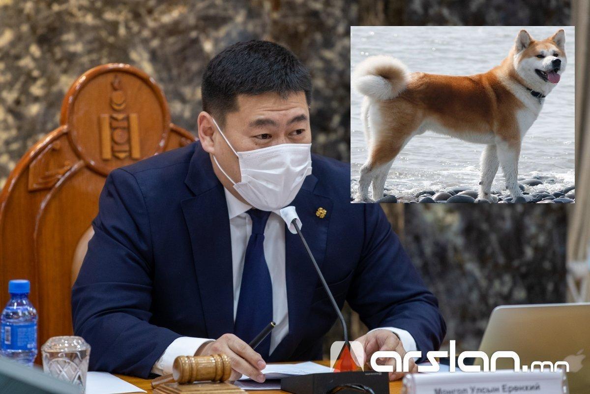 Японы Ерөнхий сайд Л.Оюун-Эрдэнэд найрамдал, нөхөрлөлийг бэлгэдэн Акита нохой бэлэглэжээ